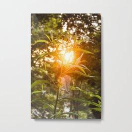 Let the light shine through Metal Print
