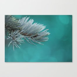 Blue spruce 3 Canvas Print
