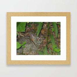 Baby Bunny Framed Art Print
