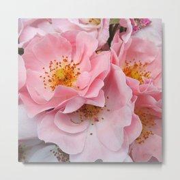 Pink Roses Clustered Metal Print