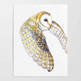 Milo - Australian Masked Barn Owl Poster