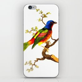 Vintage Bird on a Branch Illustration iPhone Skin