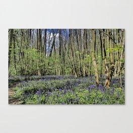 Everdon Stubbs Wood Bluebells Canvas Print