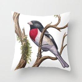 Rose-breasted Grosbeak (Pheucticus ludovicianus) Throw Pillow