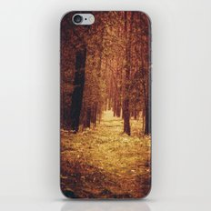 Forest Path iPhone & iPod Skin