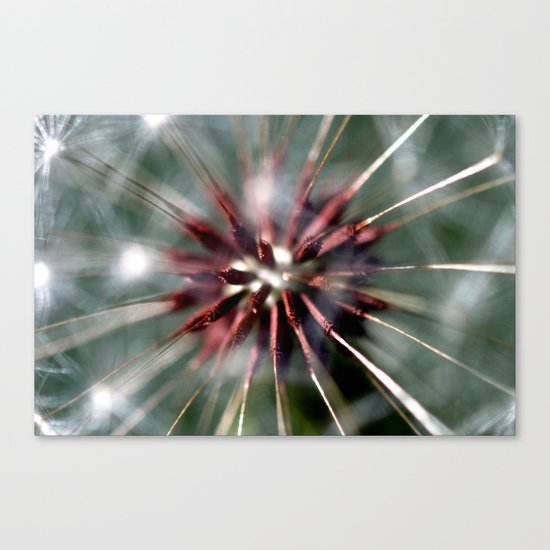 Dandelion Seed Head Canvas Print