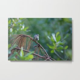 Little Guy in the Forest Metal Print