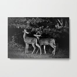 Two Fawns Metal Print