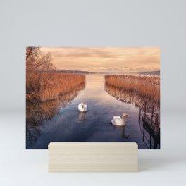 Two Beautiful Elegant White Swan Swimming Along River Between Reeds Ultra HD Mini Art Print