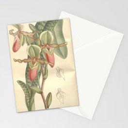 Flower 7573 paphiopedilum victoria mariae Stationery Cards