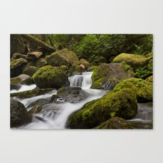 Water over moss Canvas Print