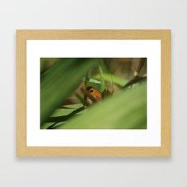Hiding Butterfly Framed Art Print