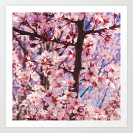 Pink Flowering Crabapple Tree Blooms Art Print