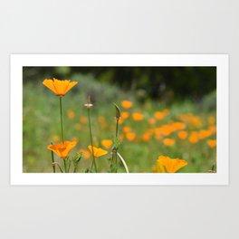 California Poppy Field Art Print