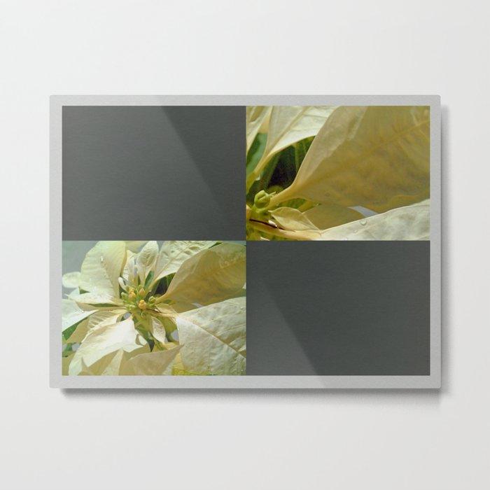 Pale Yellow Poinsettia 1 Blank Q6F0 Metal Print