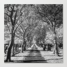 Cemetery path. Canvas Print