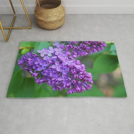 Lilacs Almost in Full Bloom Rug