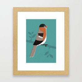 Raitán (Asturian Robin) Framed Art Print
