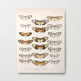 Vintage Scientific Hand Drawn Illustration Anatomy Of Butterfly Insect Patterns Biology Art Metal Print