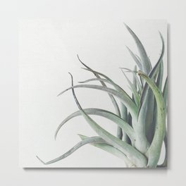 Air Plant II Metal Print