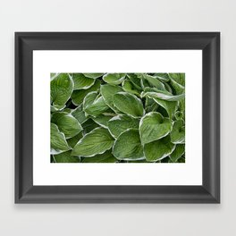Hosta Leaves in the Rain Framed Art Print