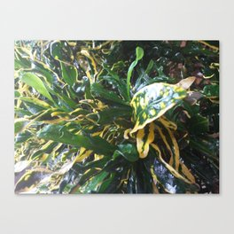Twirly Green ! Canvas Print