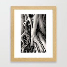 Root Of The Root Framed Art Print