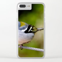 Beautiful Madeiran chaffinch bird standing one one leg at wire. Clear iPhone Case