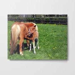 Mare feeding her foal Metal Print
