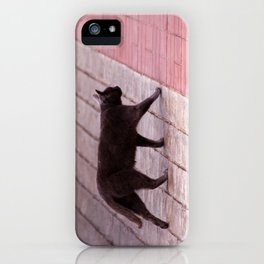 Cat Walking  6589 iPhone Case