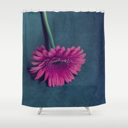 Gerbera for love Shower Curtain