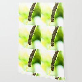 Caterpillar On A Green Plant #decor #society6 Wallpaper