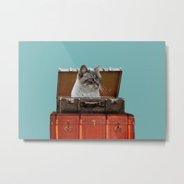 Grey white Cat sitting in old suitcase Metal Print