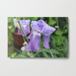 Iris. Metal Print