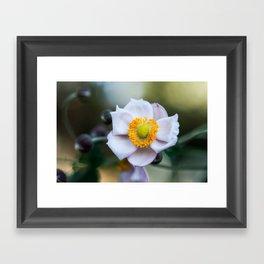 Japanese Windflower Framed Art Print