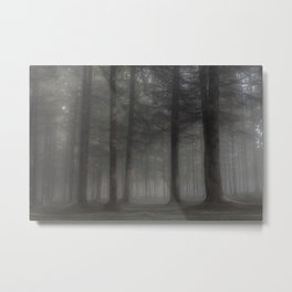 Ghostly forest - Kessock, The Highlands, Scotland Metal Print