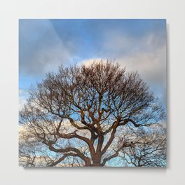 Tree-top Silhouette Against the Blue Sky Metal Print
