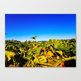 Tangled in the Pumpkin Patch Canvas Print