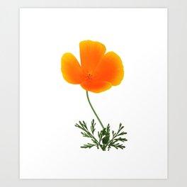 orange poppy Art Print