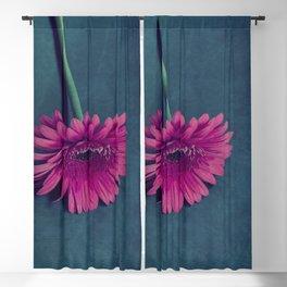 Gerbera for love Blackout Curtain