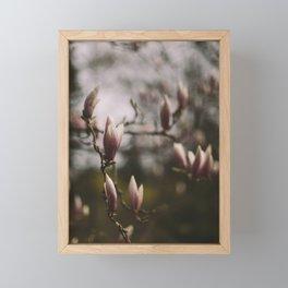 Magnolias Framed Mini Art Print