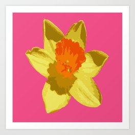 Spring Daffodil Isolated On Hot Pink Art Print