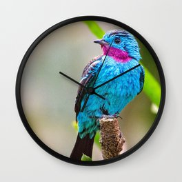 Spectacular Interesting Little Flying Creature Zoom UHD Wall Clock