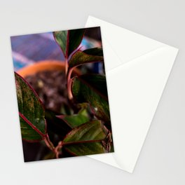 Chinese Evergreen Plant - Red and Green Stationery Cards