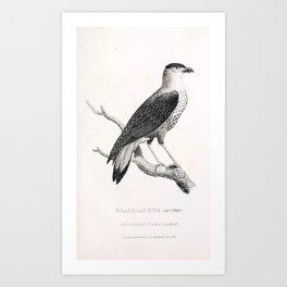 010 Brazilian Kite pandion caracara Art Print