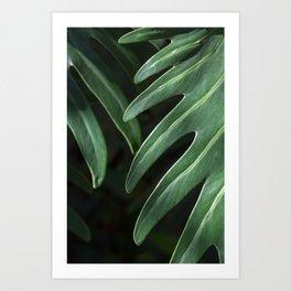 Tropical Leaves on Black Art Print