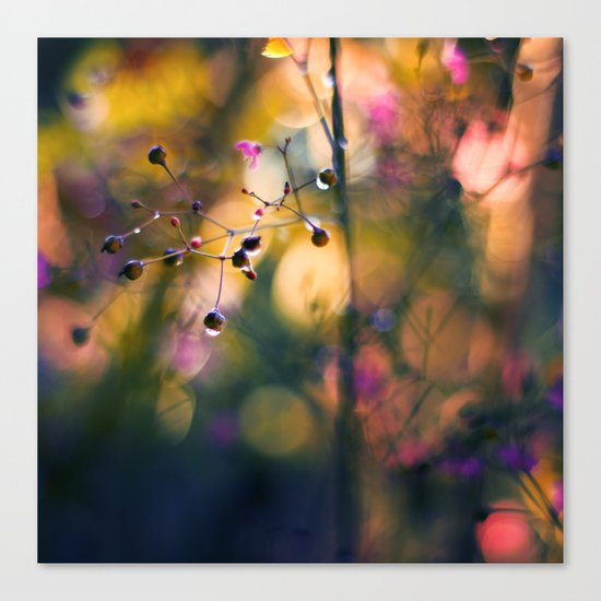The Rainbow Forest II Canvas Print