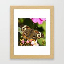 Buckeye Butterfly Framed Art Print