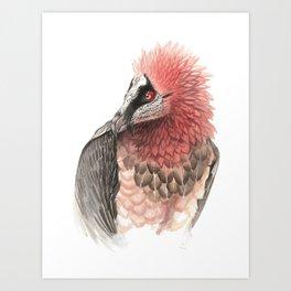 Bearded vulture Art Print