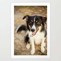 border collie Art Prints featuring Border Collie by Paw Prints By Jamie